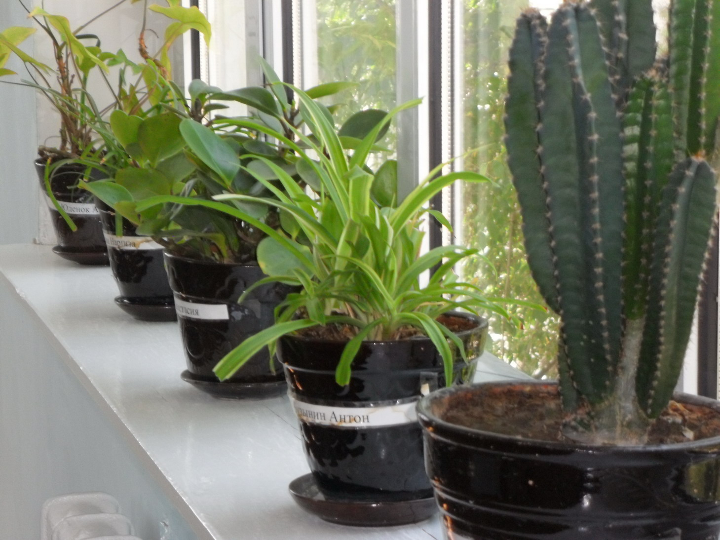 Indoor plants looked after by individual students